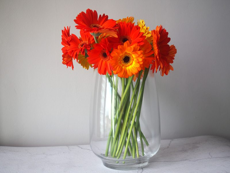 Lush and love gerbera