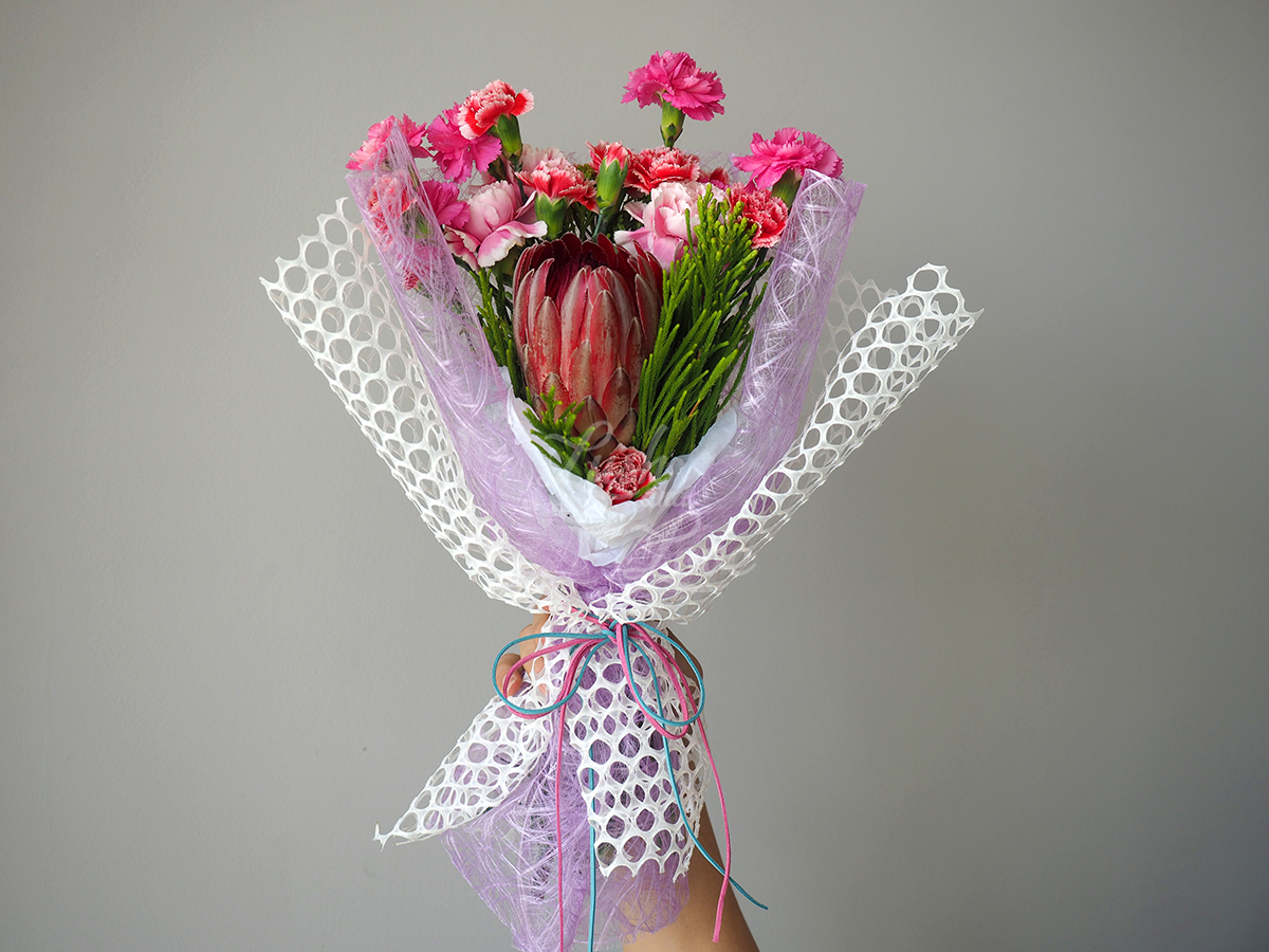 Protea 'Sylvia' flowers 2