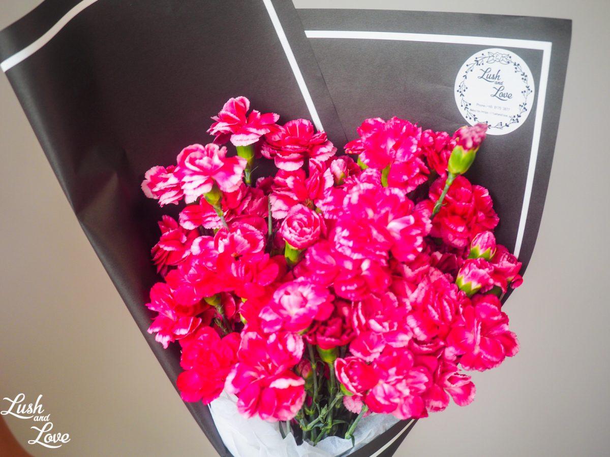 cerise carnations